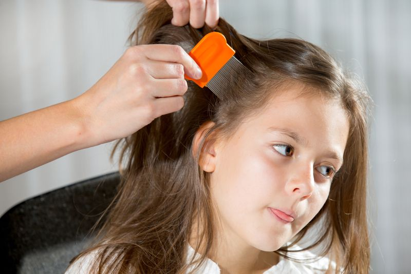 itching head lice