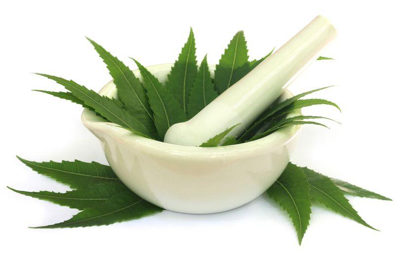 herbs for dandruff