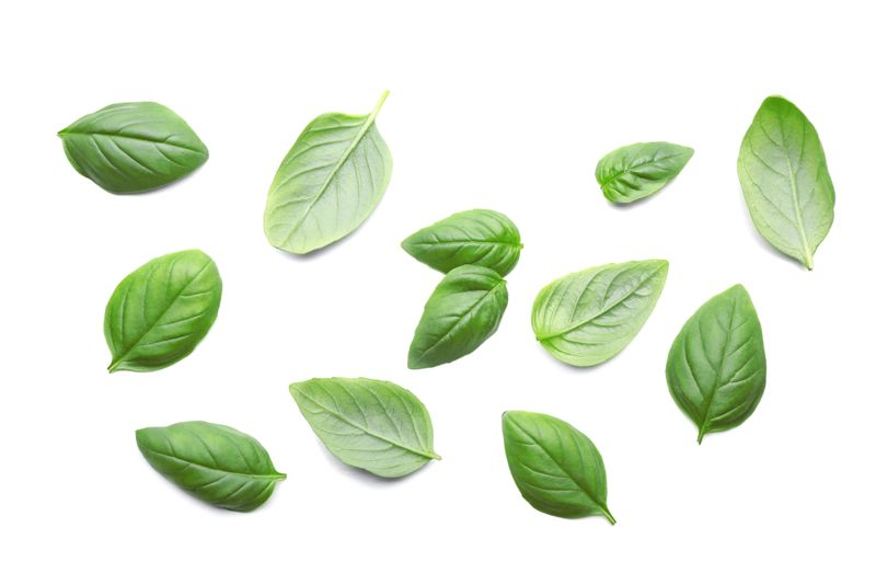 basil Home Remedies for Kidney Stones