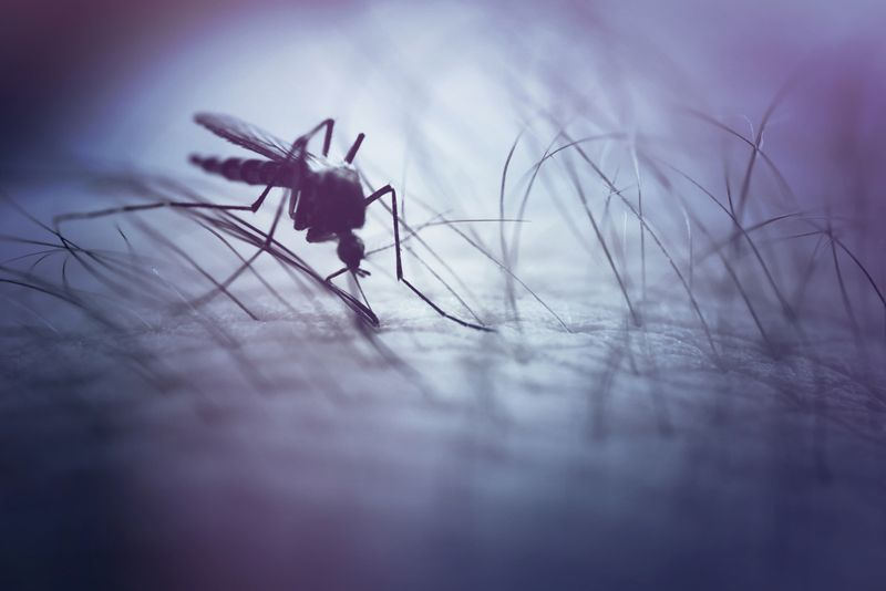 15 Home Remedies for Mosquito Bites