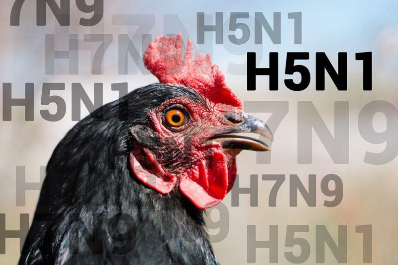10 Symptoms of Bird Flu