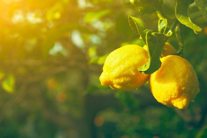 Superfruits lemons