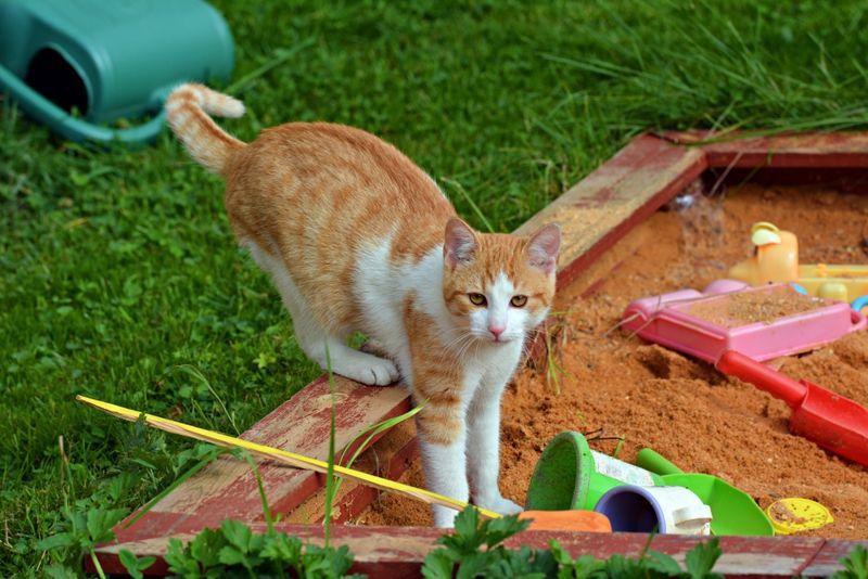 cat in a child's sandbox