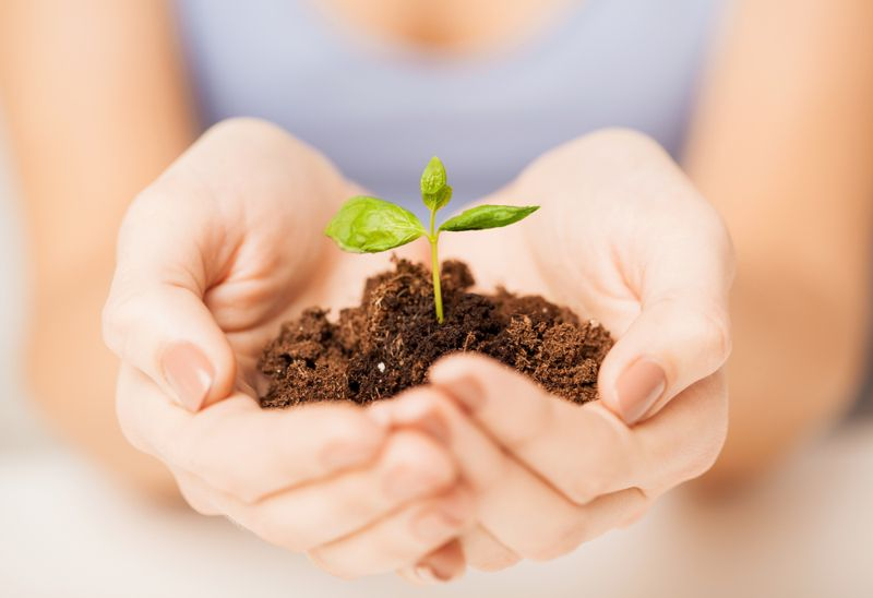 environmentally sound healthy-eating trends