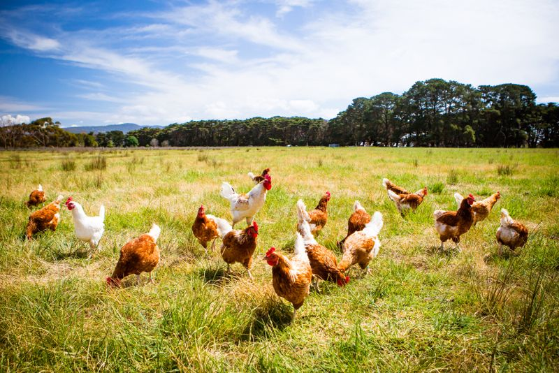 Low carb foods chickens
