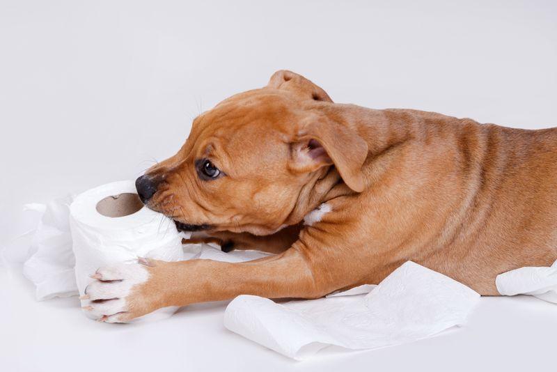 pets white vinegar