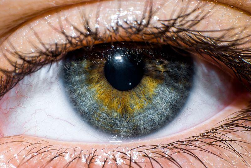eye health Cabbage