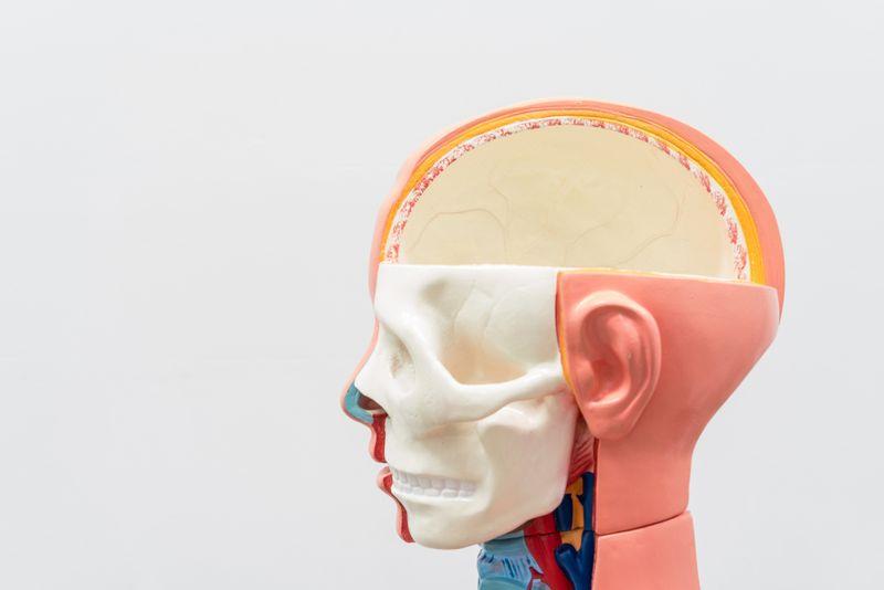 types of brain diseases