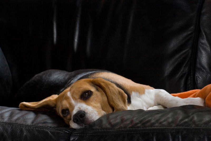 symptoms of kennel cough