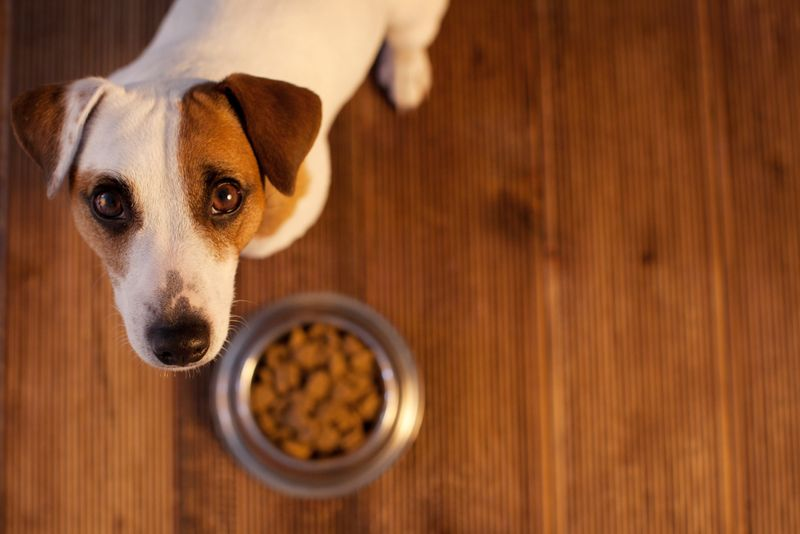 signs of kennel cough