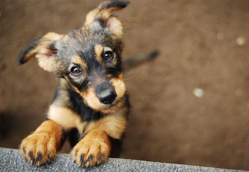 dogs phobias