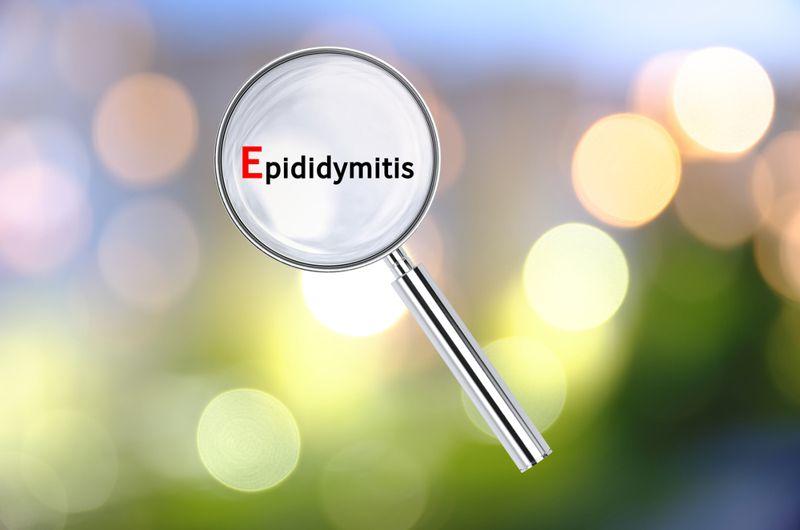 scrotum epididymis