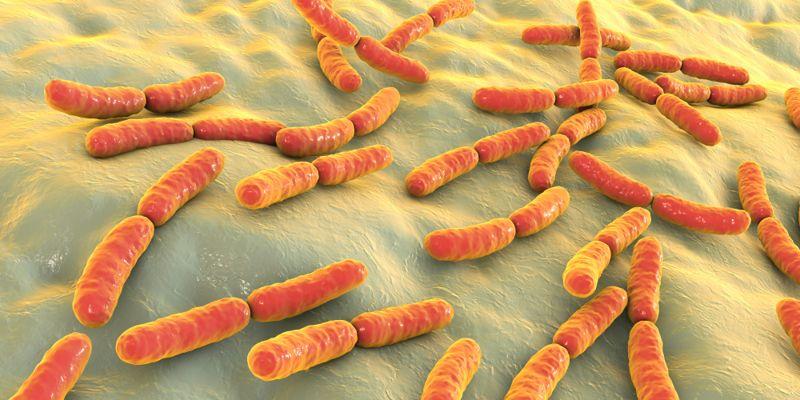 Galangal microbes