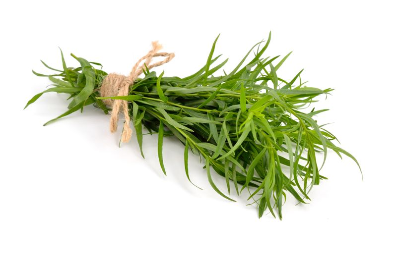 Acts as a mild anesthetic in dentistry Tarragon