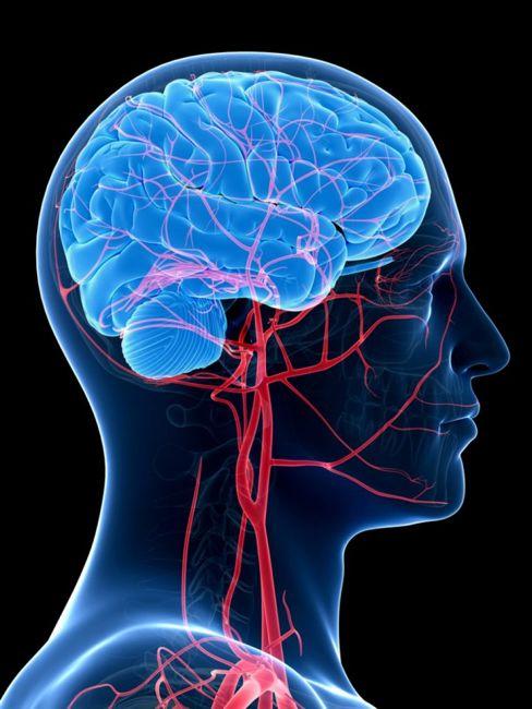 Can Improve Heart & Brain Health