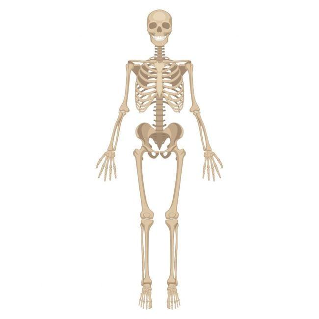 Helps Prevent Bone Loss