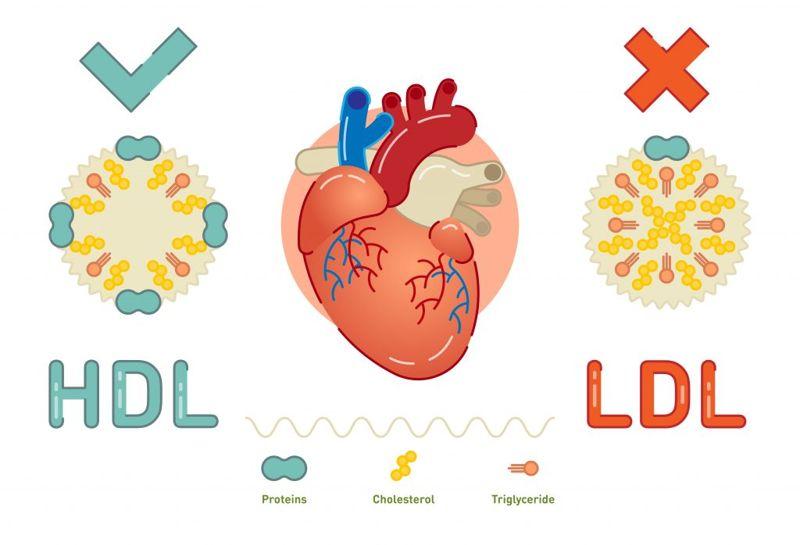 Lowers Blood Cholesterol Fenugreek