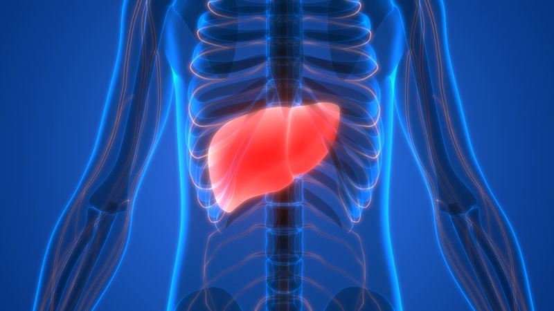 Maximizes Liver Function