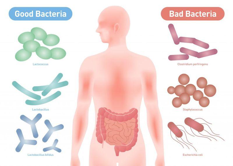 Miso Fills You with Probiotics