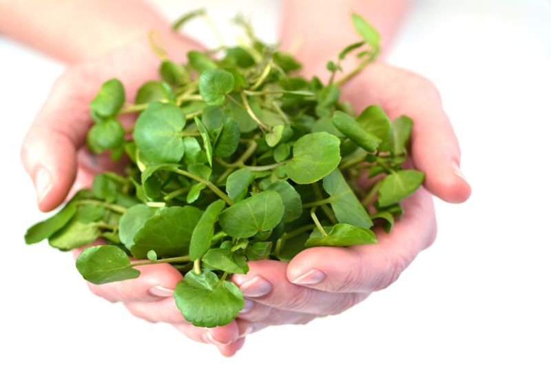Treatment for Coughs WatercressWatercress
