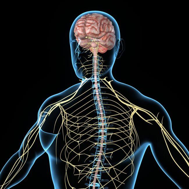 Enhance your nervous system