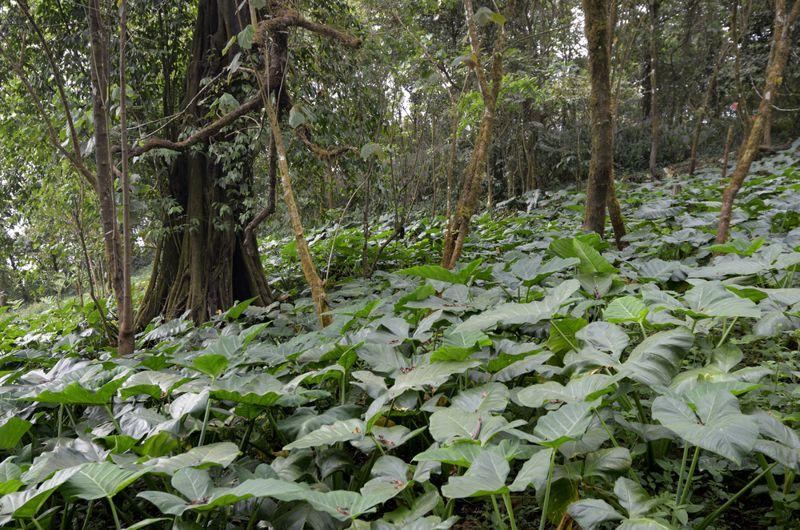 Habitat of Wild Yam