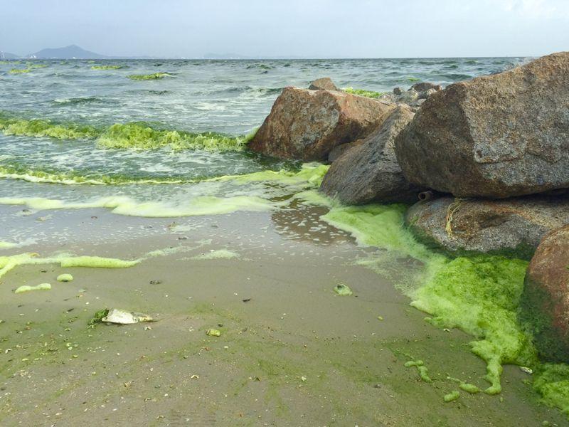 Help for Depression Phytoplankton