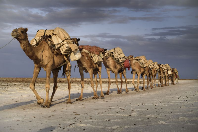 Is Camel Milk the Wave of the Future?