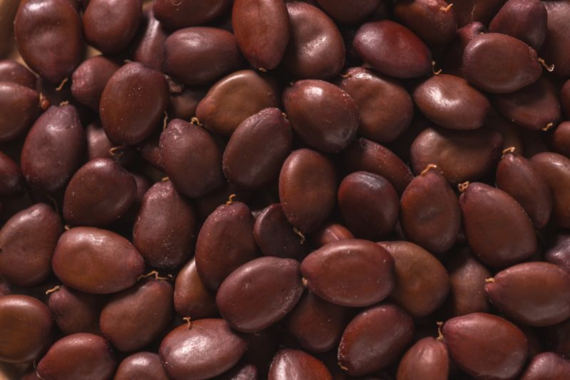 Natural Antioxidant Carob