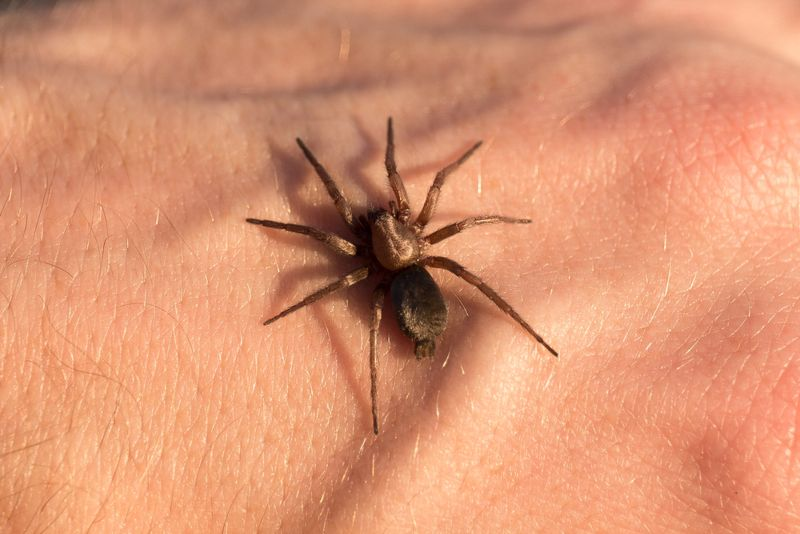 What Kind of Spider Will Bite You?