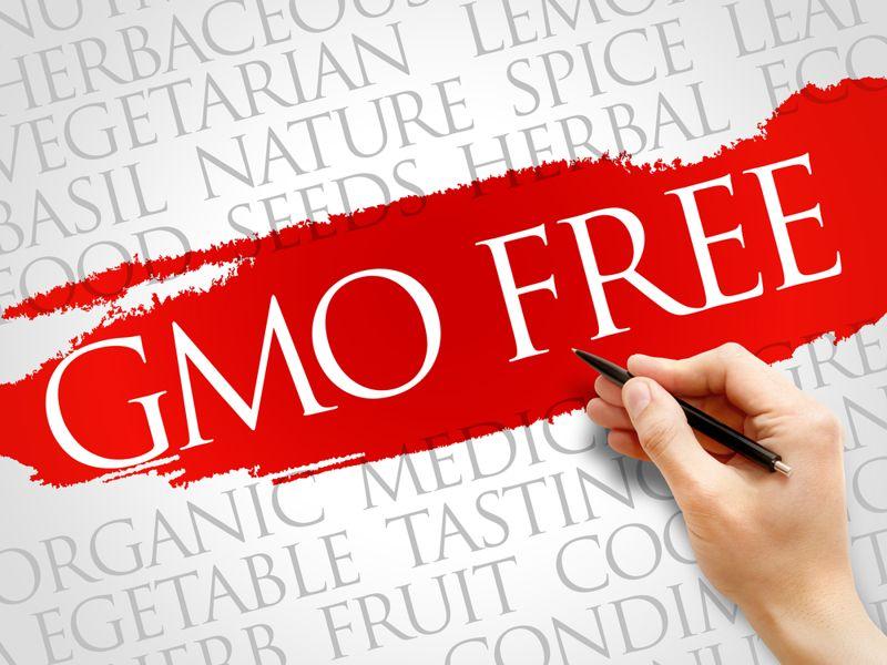 GMO Sorghum
