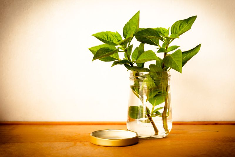 basil extracts health benefits