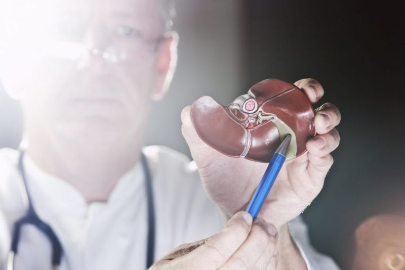 digestion The gallbladder