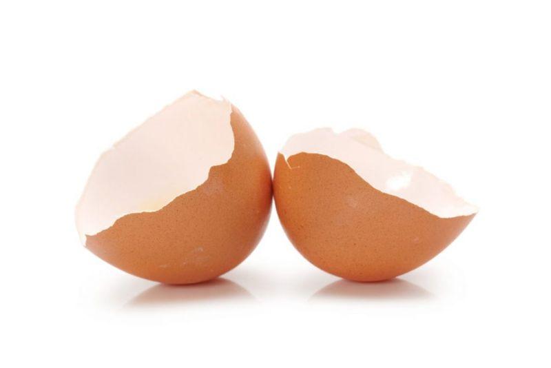 tooth enamel eggshells