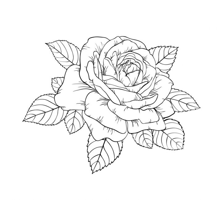 beautiful black and white rose and leaves. Floral arrangement isolated on background. design greeting card and invitation of the wedding, birthday, Valentine s Day, mother s day, holiday