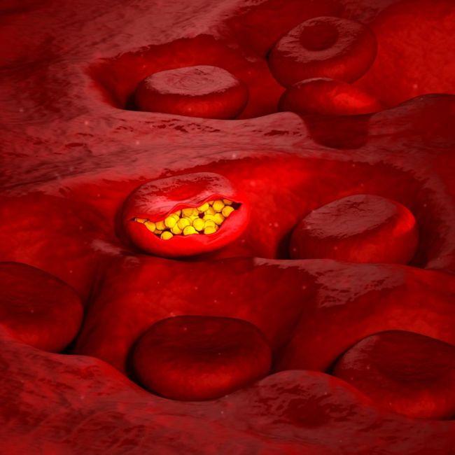 determining treatment malaria