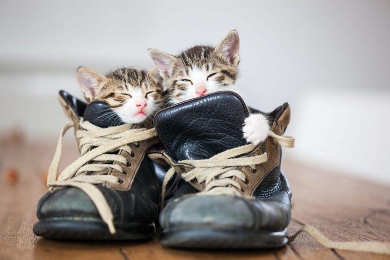 location sleep cat cat-bed