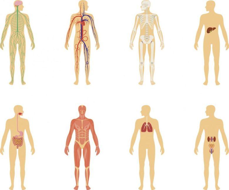 health fascia