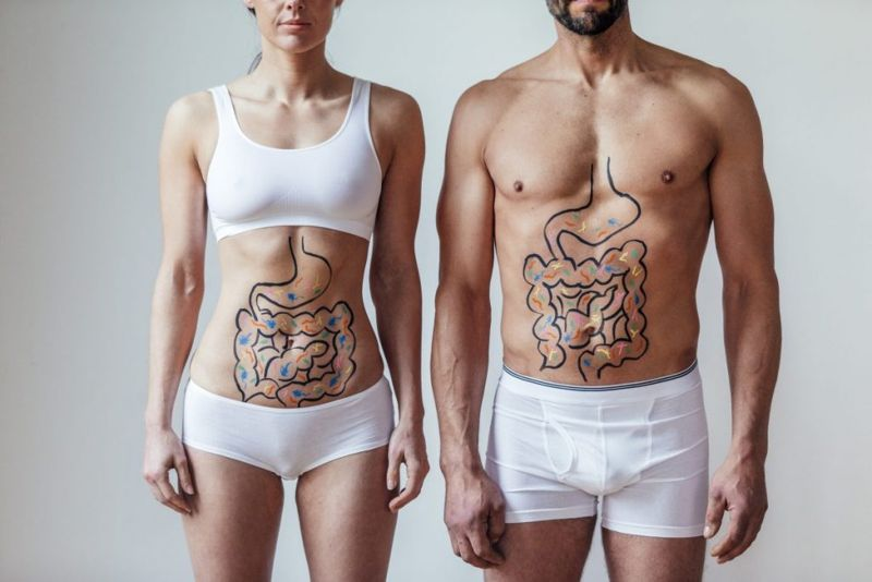 facts about the large intestine