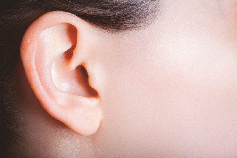 outer ear bones