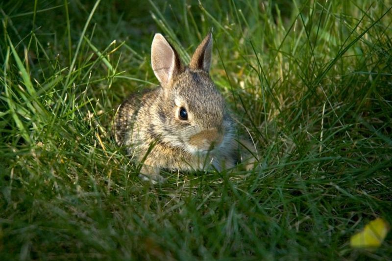 what is Tularemia risks