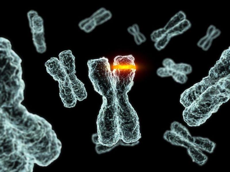 somatic, gene mutation, sporadic, inherited
