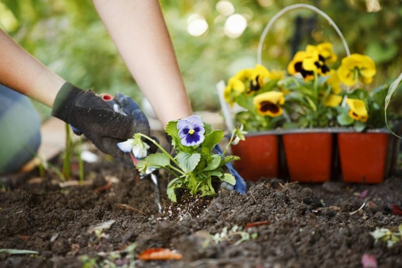 bacteria soil digging garden