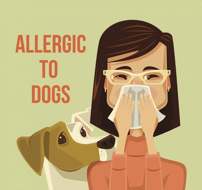 allergies shih tzu