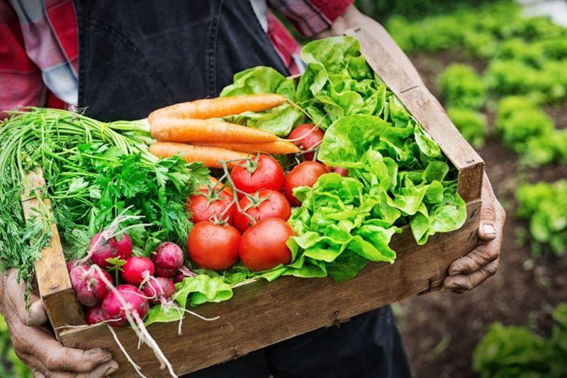 get started on the alkaline diet