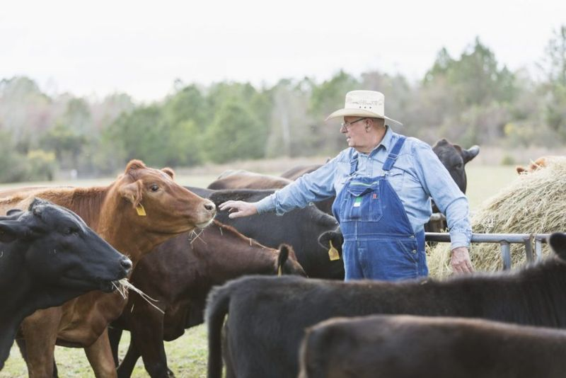 Who is at Risk for Contracting Brucellosis?