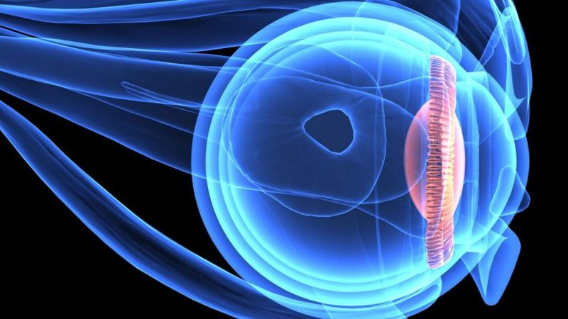 Retinitis pigmentosa eyesight