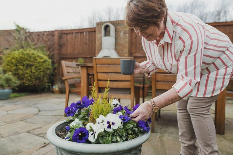 anxiety health benefits of pansies