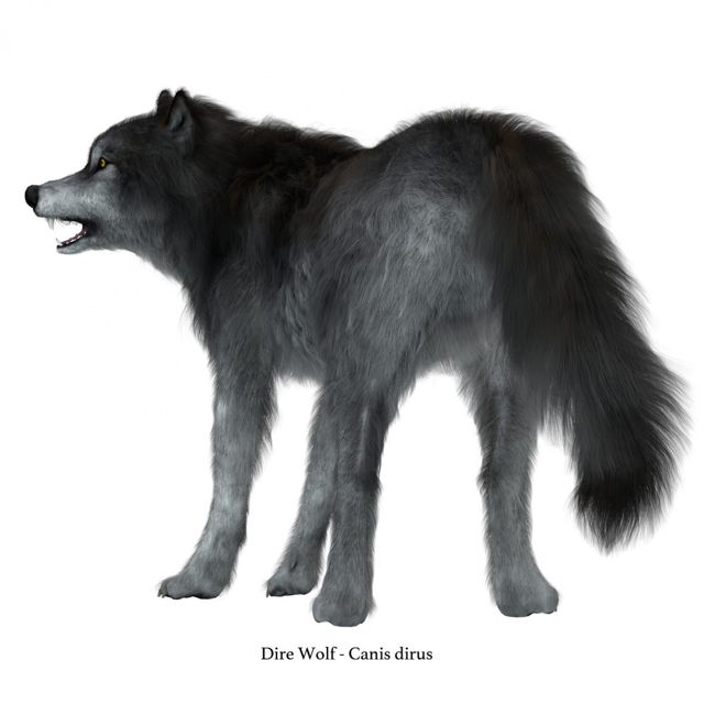 What Is A Dire Wolf? Dire Wolf Facts