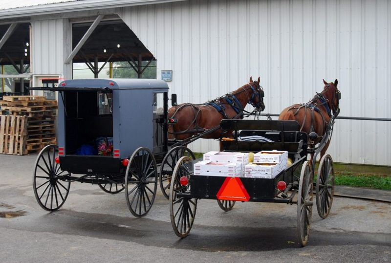 transportation amish